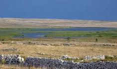 Ornithological reserve